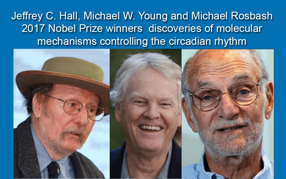 Molecular mechanics controlling the circadian rhtythm