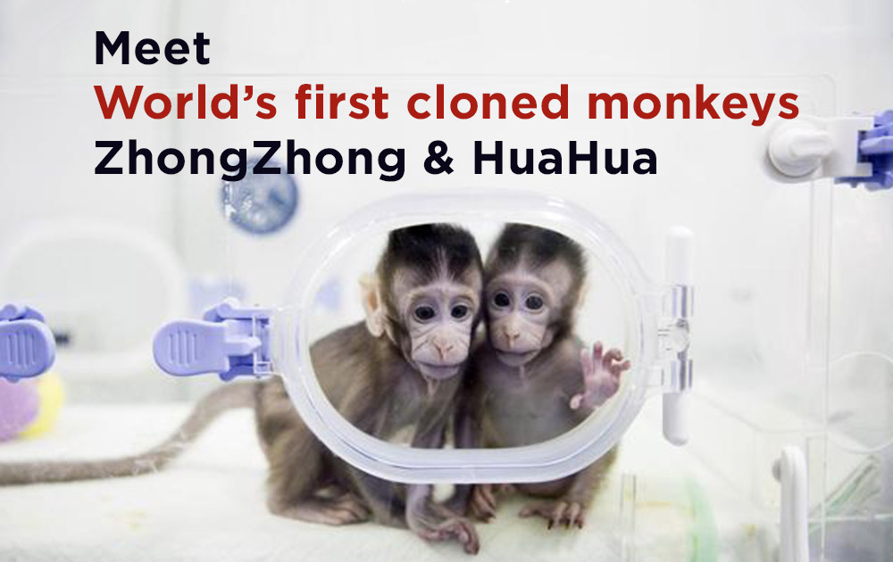 World's first cloned monkeys