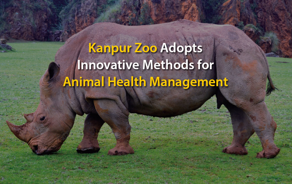 Kanpur Zoo Adopts Innovative Methods for Animal Health Management