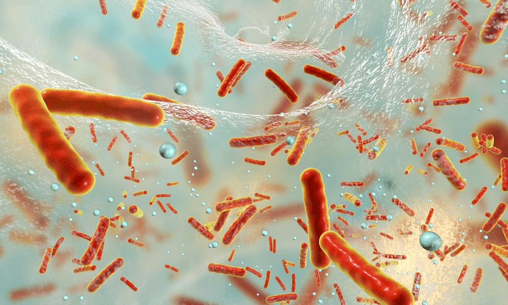 Post Antibiotic World