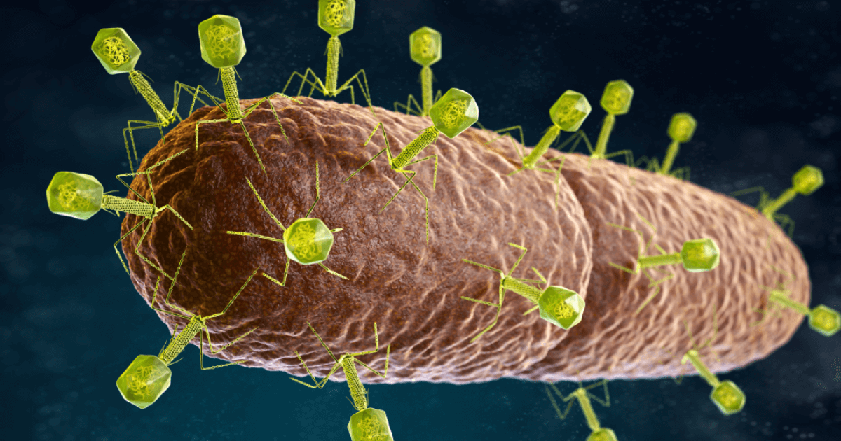 Nature's own antibiotic <br> bacteriophage virus